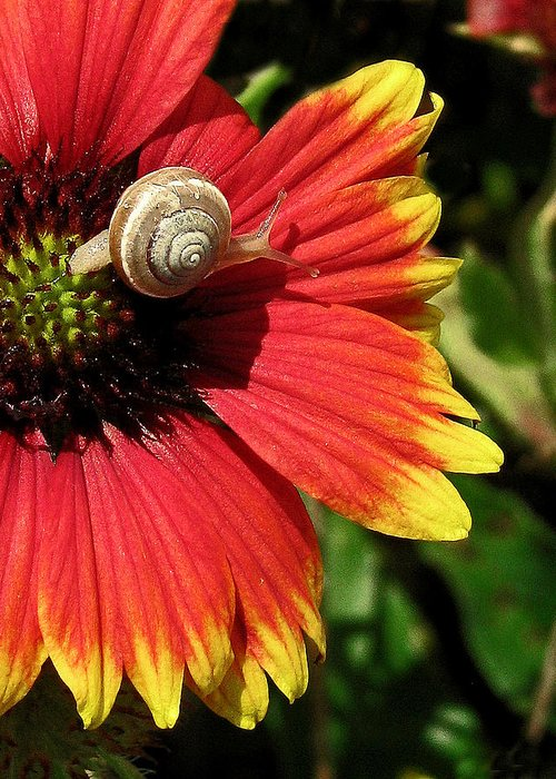 Nature Greeting Card featuring the photograph A Snail's Pace by Peg Urban