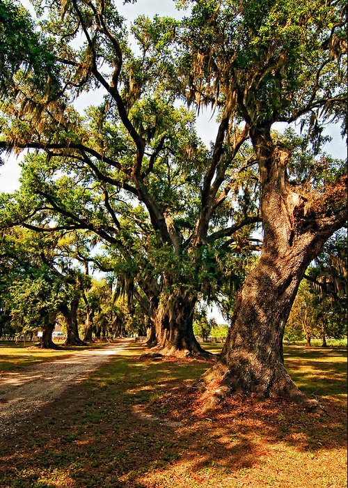 Evergreen Plantation Greeting Card featuring the photograph A Southern Stroll by Steve Harrington