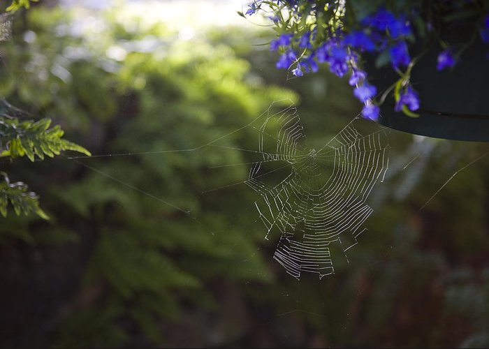 Massett Greeting Card featuring the photograph A Spider Web In A Garden by Taylor S. Kennedy
