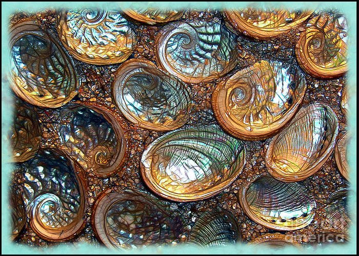 Abalones Greeting Card featuring the photograph Abalones by Judi Bagwell