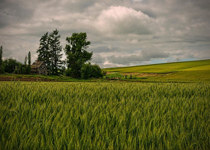 The Palouse Greeting Card featuring the photograph Abandoned by Dan Mihai