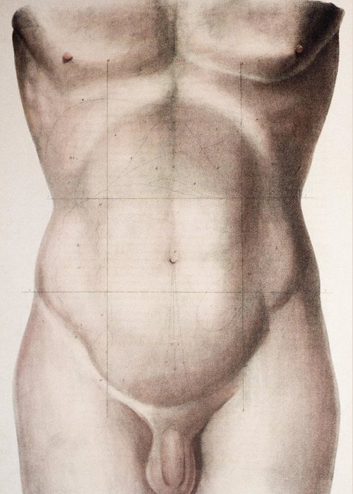 Human Greeting Card featuring the photograph Abdominal Regions by Mehau Kulyk