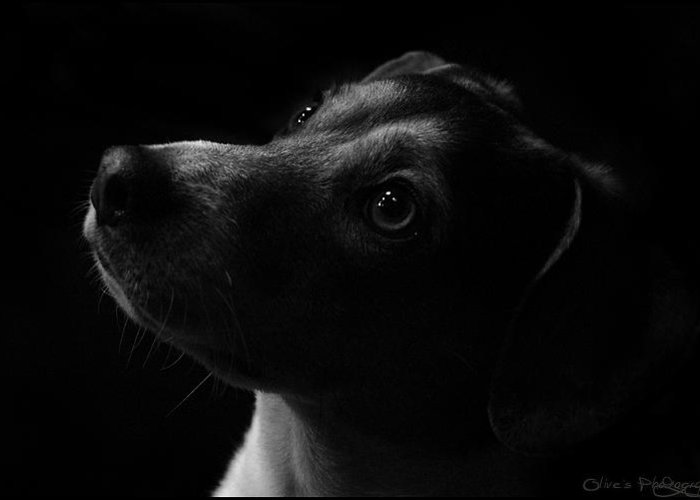 Low Key Shot Alivia Houdek Admiration Photograph Photo Image Picture Black Dark Art Rotty Dog Pet Domestic Puppy Eyes Black And White Night Photography Olive Olives Studio For Sale Greeting Card featuring the photograph Admiration by Alivia Houdek
