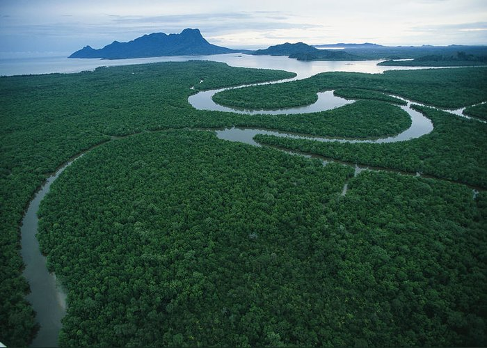 Asia Greeting Card featuring the photograph Aerial View Of The Salak River. Mount by Tim Laman