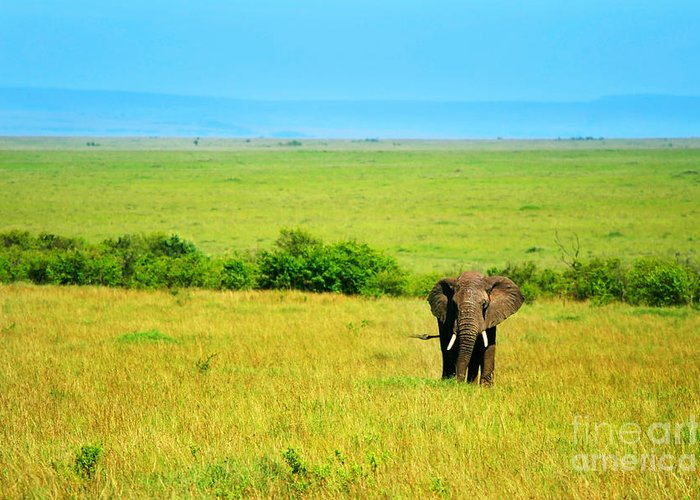 Africa Greeting Card featuring the photograph African Elephant In The Wild by Anna Om