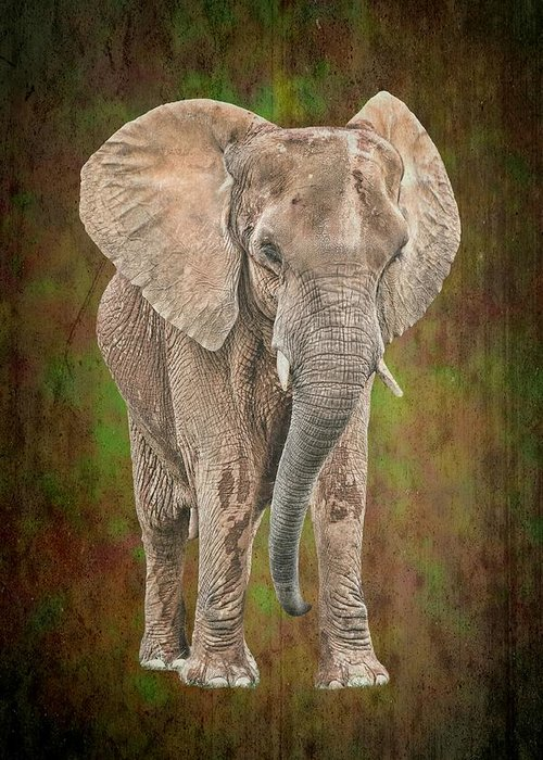 Isolated Greeting Card featuring the photograph African Elephant by Rudy Umans