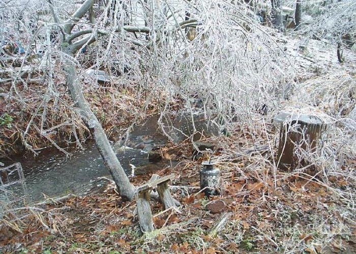 Ice Greeting Card featuring the photograph After The Ice Storm In Maine by Jeannie Atwater Jordan Allen