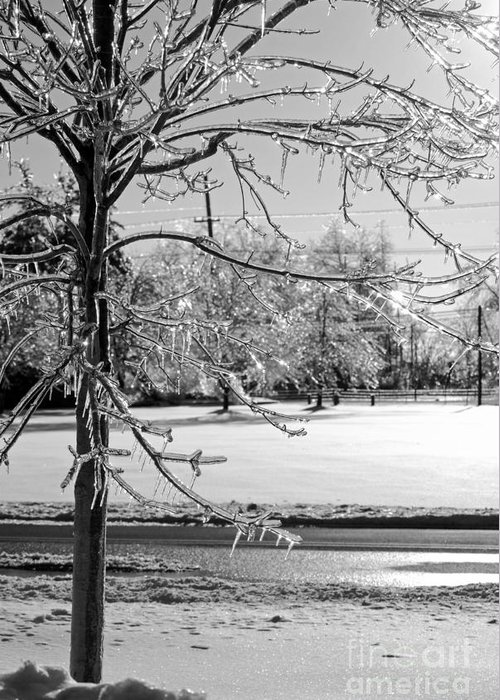 Ice Storm Greeting Card featuring the photograph After The Ice Storm by Lila Fisher-Wenzel