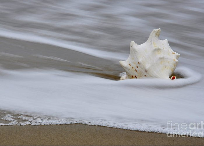 Sea Greeting Card featuring the photograph After The Wave by Tamera James