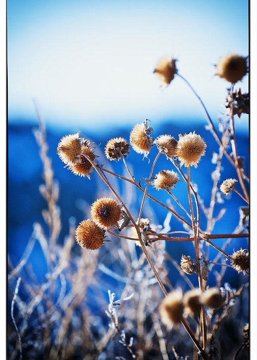 Nature Greeting Card featuring the photograph Against The Blue Sky by Lisa Spencer