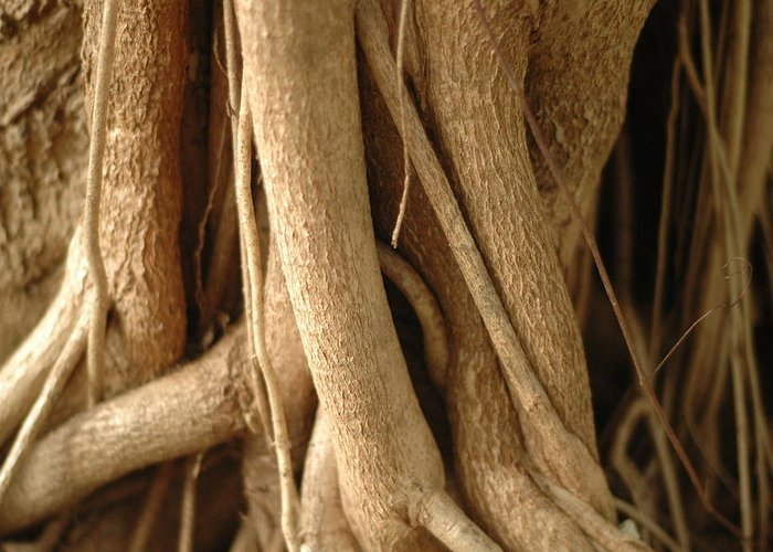 Roots Greeting Card featuring the photograph Air Roots by Noah Katz