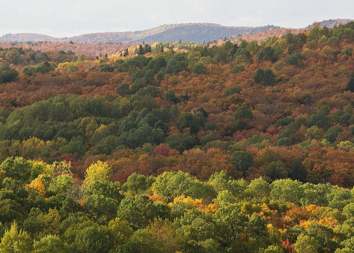 Fall Greeting Card featuring the photograph Algonquin In Autumn by Cale Best