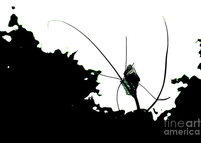 Abstract Greeting Card featuring the photograph Alien Garden by Allen Sindlinger