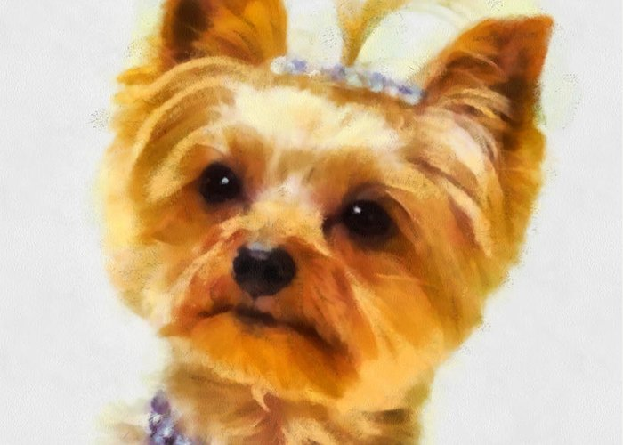 Yorkie Dog Painting Yorkshire Terrier Dog Nature Pictureoftheday Painting Of The Day Nature Animals Watercolor Painting Pet Portrait Yorkie Puppy Animals Puppies Dogs Pet Paintings Greeting Card featuring the painting All Dressed Up by Elizabeth Coats