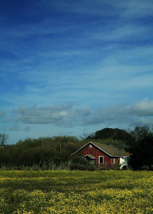 Mustard Greeting Card featuring the photograph All That Yellow by Laurie Search