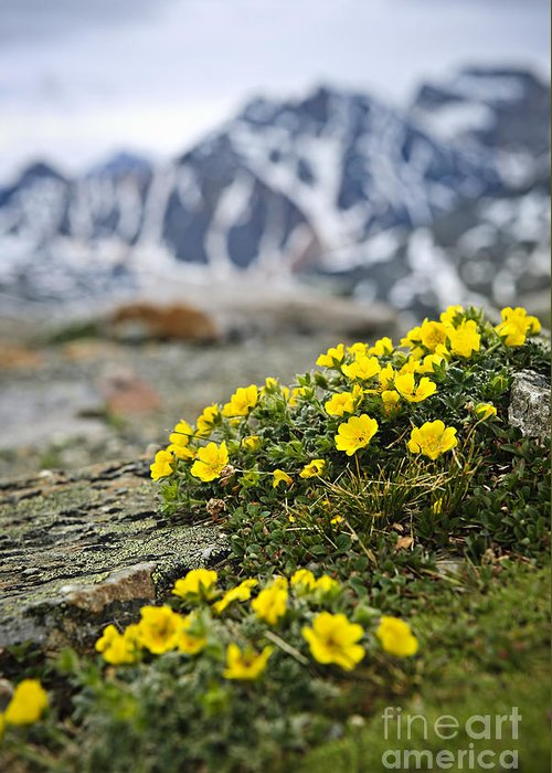 Alpine Greeting Card featuring the photograph Alpine Meadow by Elena Elisseeva