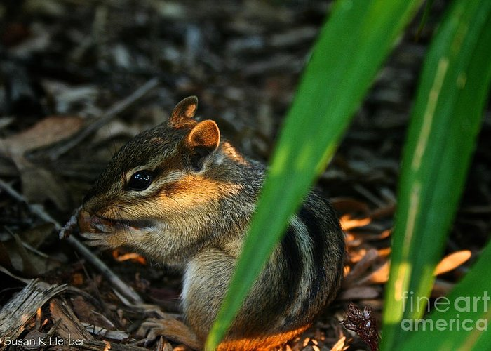 Outdoors Greeting Card featuring the photograph Alvin by Susan Herber