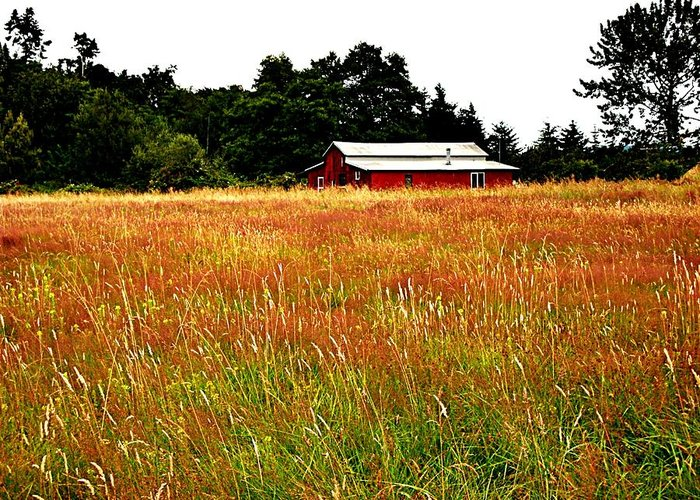 Barn Greeting Card featuring the photograph Amber Waves by Kevin D Davis