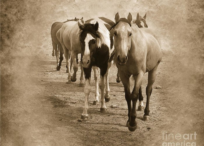 American Quarter Horse Greeting Card featuring the photograph American Quarter Horse Herd In Sepia by Betty LaRue