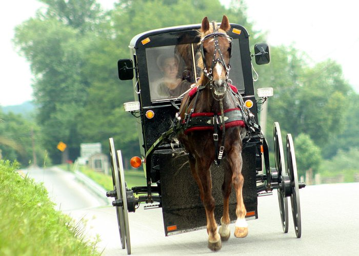 Amish Greeting Card featuring the photograph Amish Buggy On The Road by Emanuel Tanjala