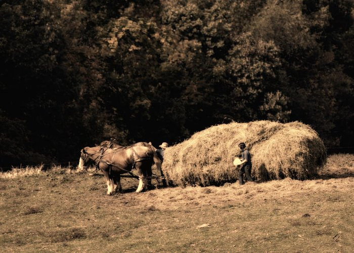 Amish Greeting Card featuring the photograph Amish Hay Wagon by Tom Mc Nemar