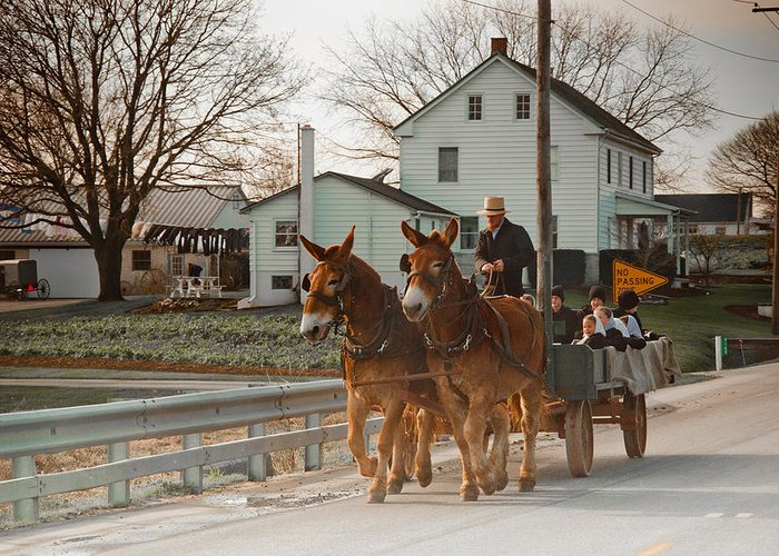 Amish Greeting Card featuring the photograph Amish Wagon by Heidi Reyher