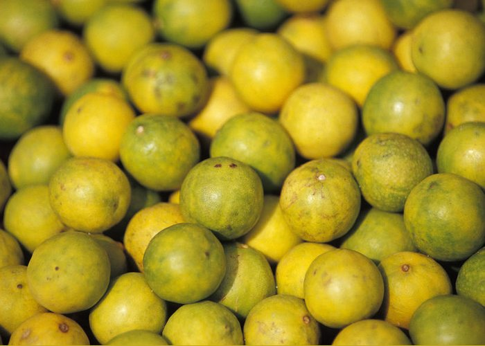 Lemon Greeting Card featuring the photograph An Enticing Display Of Lemons by Jason Edwards