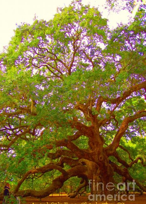 Angel Oak Tree Greeting Card featuring the photograph Angel Oak Tree1 by Donna Bentley