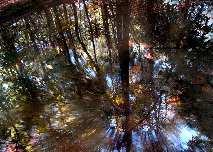 Pond Greeting Card featuring the photograph Anomaly by Tammy Cantrell