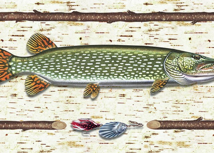 Pike Greeting Card featuring the painting Antique Birch Pike And Lure by JQ Licensing