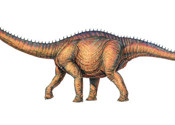 Thunder Lizard Greeting Card featuring the photograph Apatosaurus Dinosaur by Joe Tucciarone
