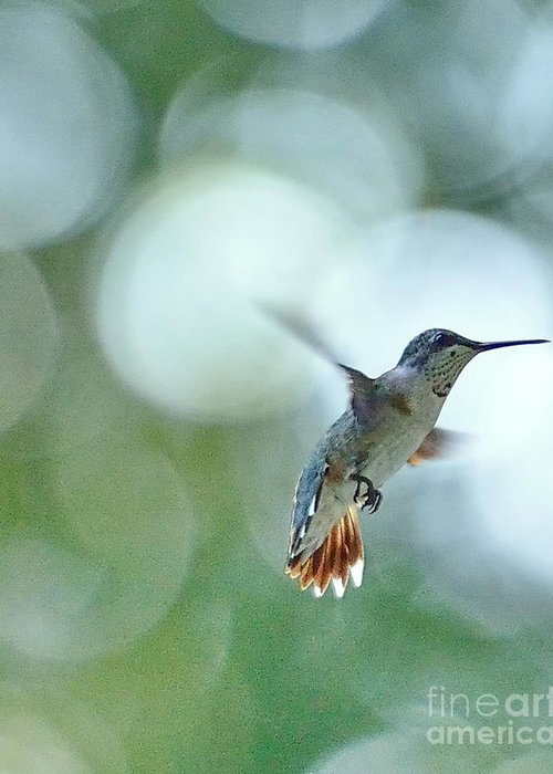 Hummingbird Greeting Card featuring the photograph Approaching The Light by Wayne Nielsen