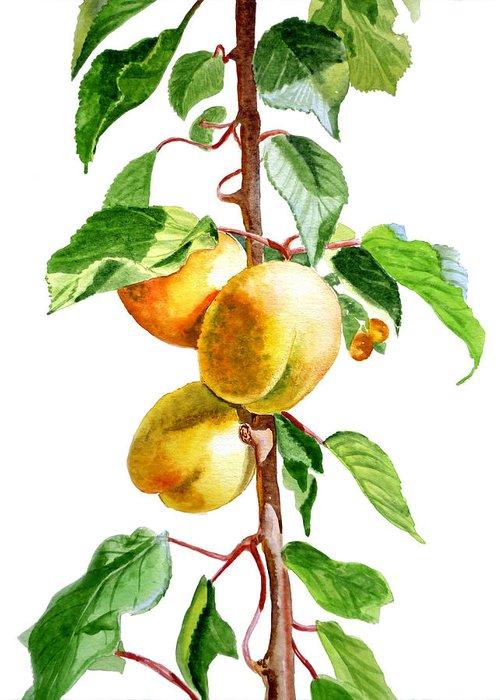 Apricot Greeting Card featuring the painting Apricots by Irina Sztukowski