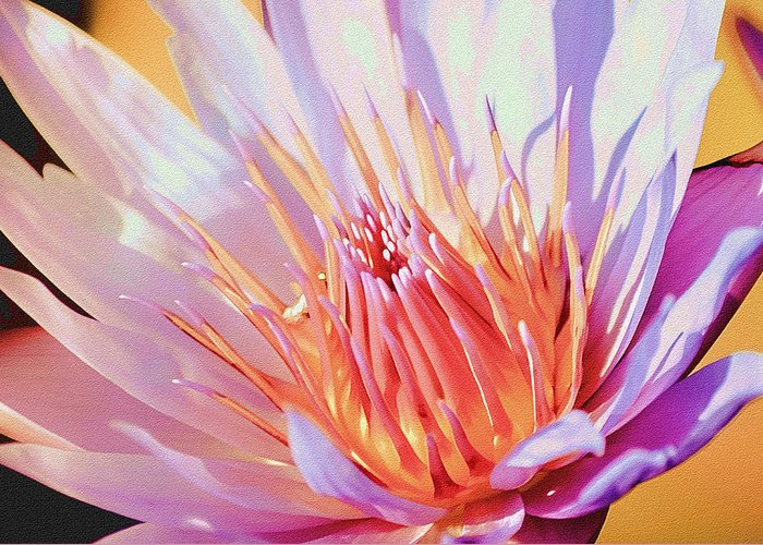 Water Lily Greeting Card featuring the photograph Aquatic Bloom by Julie Palencia