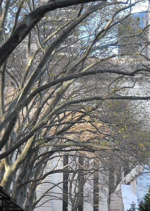 Trees Greeting Card featuring the photograph Arched Trees by Kimberly Perry