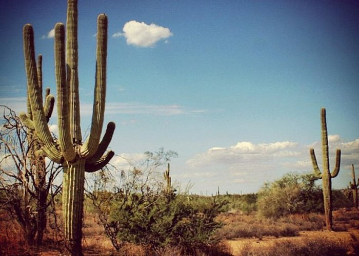 Desert Greeting Card featuring the photograph Arizona by Luisa Azzolini