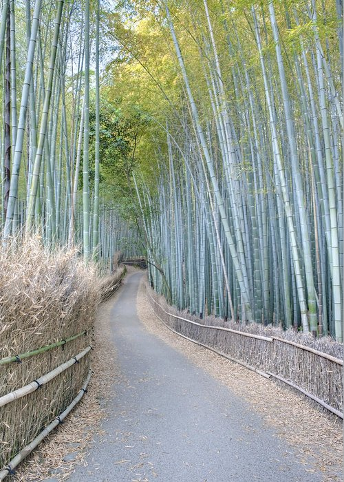 Photography Greeting Card featuring the photograph Asia Japan Kyoto Arashiyama Sagano by Rob Tilley