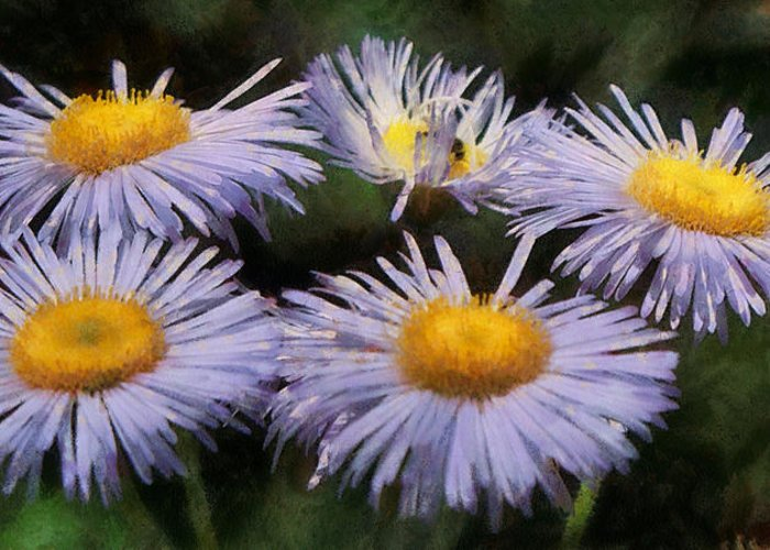 Asters Greeting Card featuring the digital art Asters Painterly by Ernie Echols