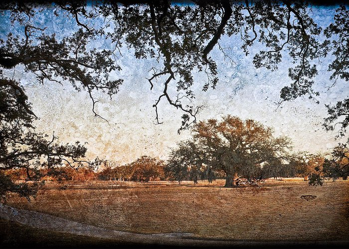 Texture Greeting Card featuring the photograph Audubon Golf Course by Ray Devlin