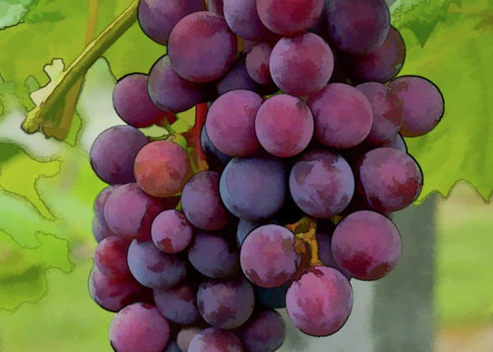 Grapes Greeting Card featuring the photograph August Grapes by Michael Flood