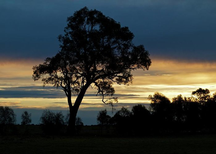 Silhouette Greeting Card featuring the photograph Aussie Silhouette by Chris Anthony