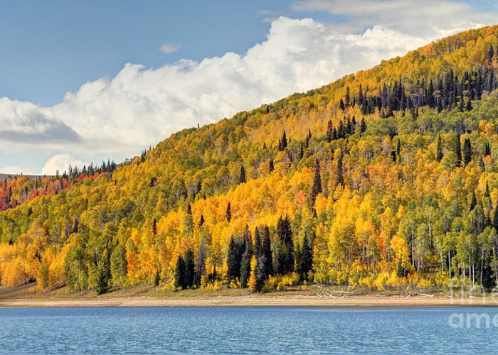 Autumn Greeting Card featuring the photograph Autumn At Huntington Reservoir - Wasatch Plateau - Utah by Gary Whitton