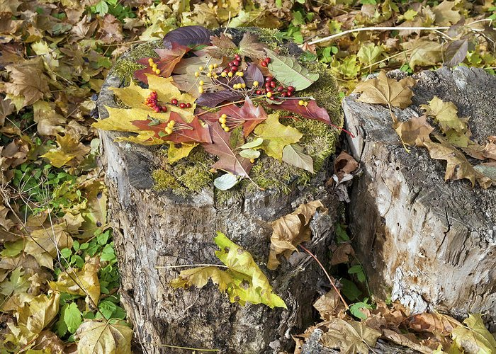 Leaves Greeting Card featuring the photograph Autumn Berries And Leaves by Aleksandr Volkov
