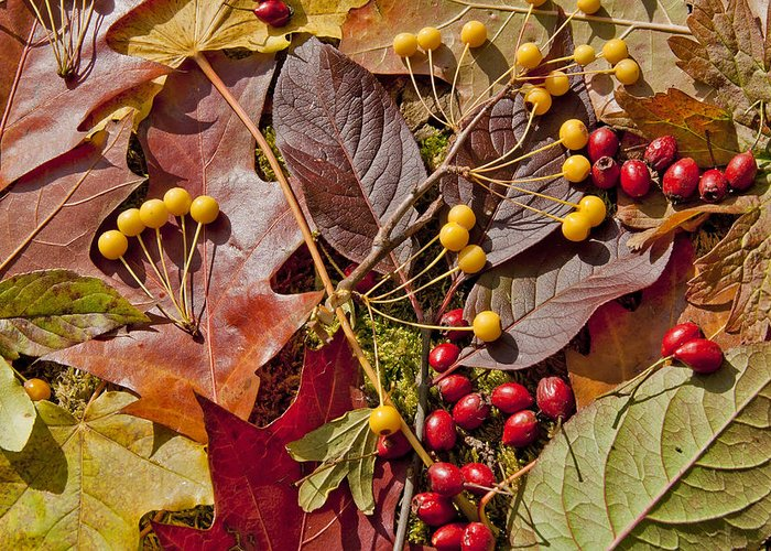 Leaves Greeting Card featuring the photograph Autumn Berries And Leaves Background by Aleksandr Volkov