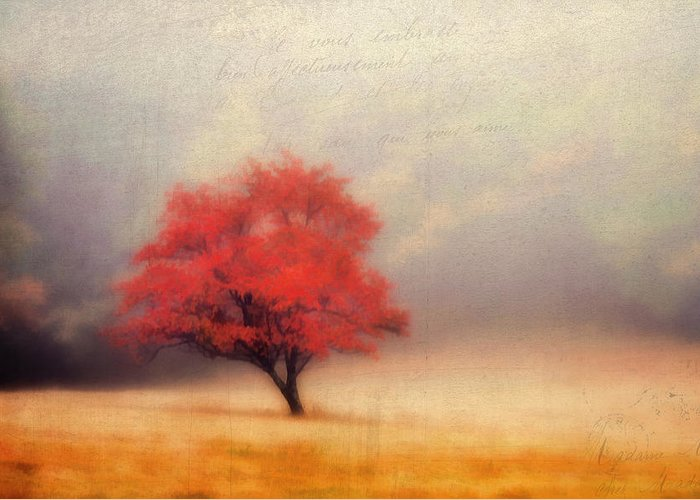 Blue-ridge-parkway Greeting Card featuring the photograph Autumn Fog by Darren Fisher