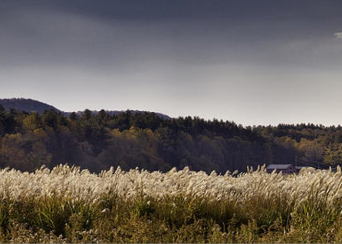 Autumn Greeting Card featuring the photograph Autumn Grasses - North Carolina Autumn Scene by Rob Travis