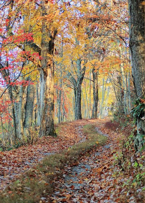 Autumn Greeting Card featuring the photograph Autumn Lane by Heavens View Photography