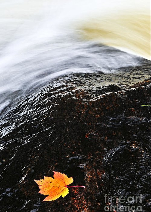 River Greeting Card featuring the photograph Autumn Leaf On River Rock by Elena Elisseeva