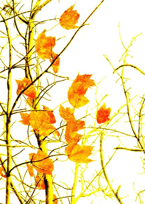 Abstract Greeting Card featuring the photograph Autumn Leaves Abstract by Andee Design