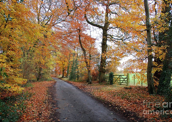 Arley Estate Greeting Card featuring the photograph Autumn Leaves by Harold Nuttall